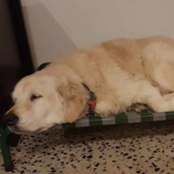 This photo of a smiling, drugged-up dog post-surgery is rightfully stealing the internet's heart