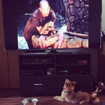 11 dogs binge watching TV who understand the couch potato struggle is too real