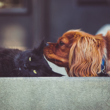 This dog that was raised with cats looks hilariously comfortable with the feline lifestyle