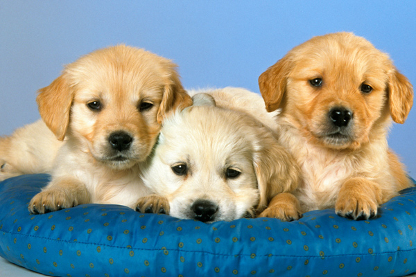 These international pet names are so cute, you'll want to adopt a pet and name her ASAP