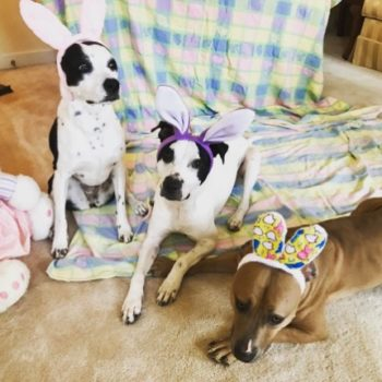 These pets could not be more ready for Easter