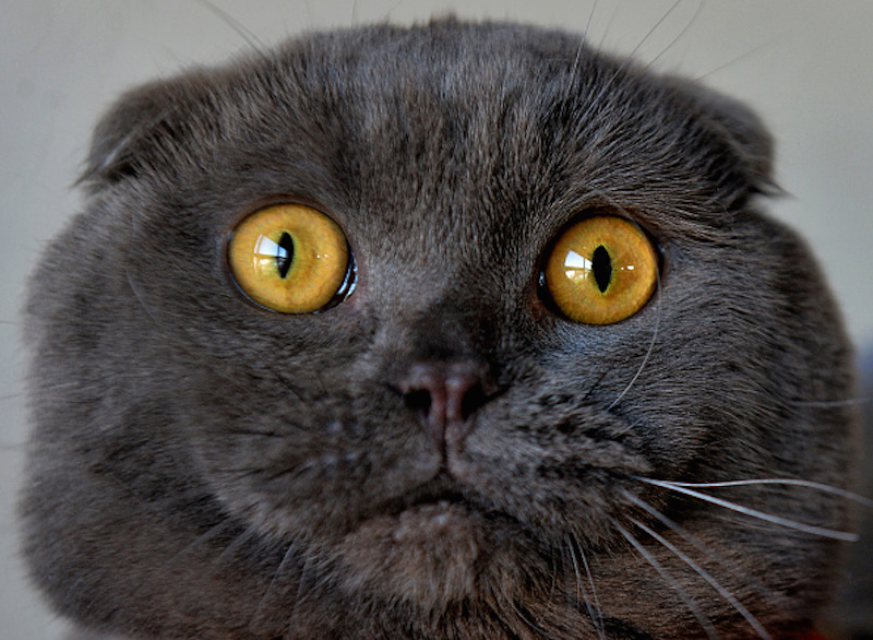 Your cat is making faces at you, and science says you should pay attention