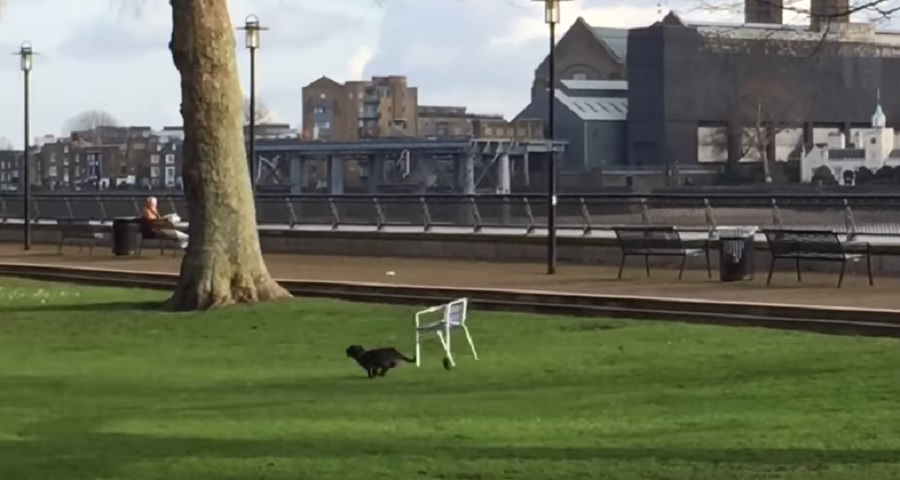 This dog running while tied to a chair refuses to let anything steal his joy