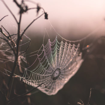 This incredible spider web covers an entire field, and it's creepy and beautiful at the same time