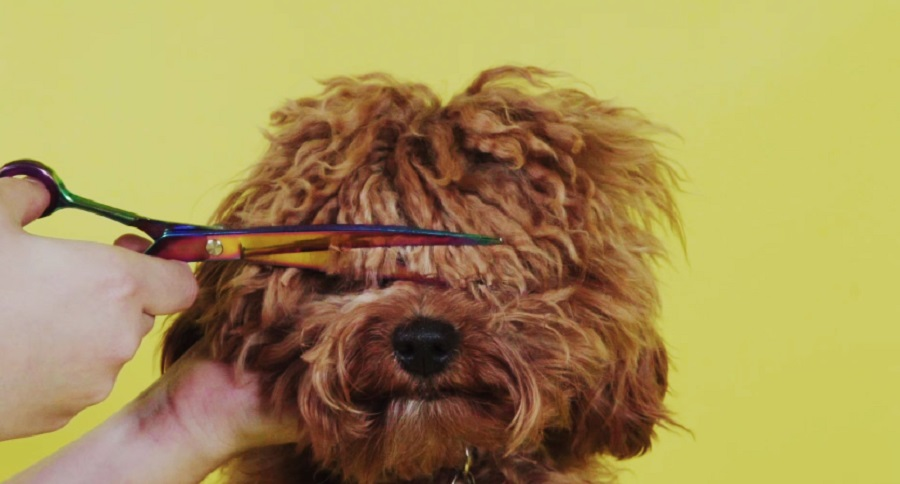 Watching these dogs get their bangs trimmed will bring you so much relief