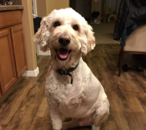 This three-legged dog is a cancer survivor, and we can thank him for the most heartwarming Twitter thread of all time