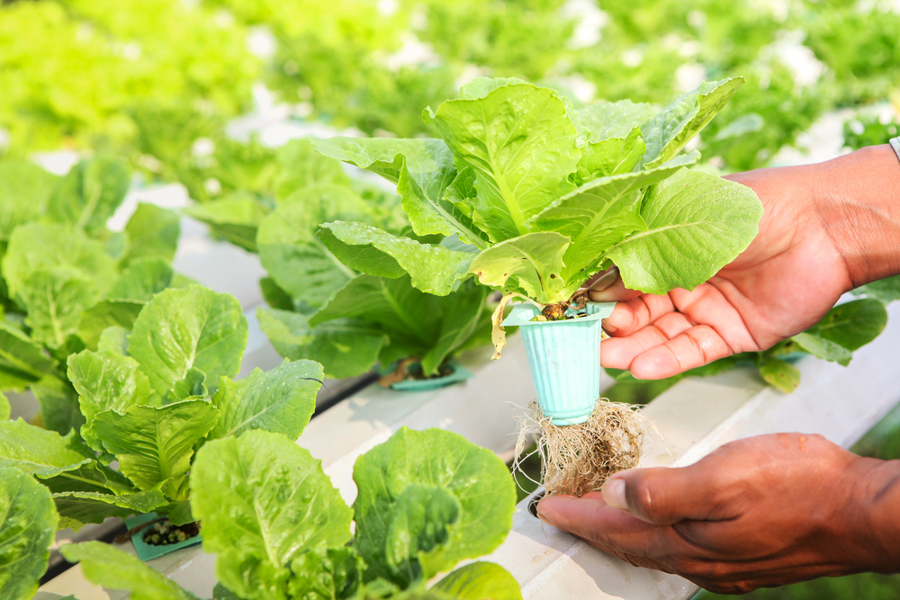 7 things you need to know about aquaponics, a tiny ecosystem you can build at home