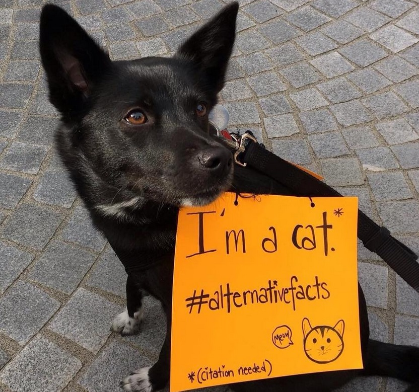 There were so many good dogs at the March for Science, we can't pick a favorite