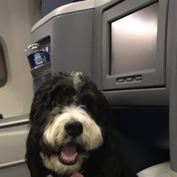 Everyone wants to sit next to this very fancy dog