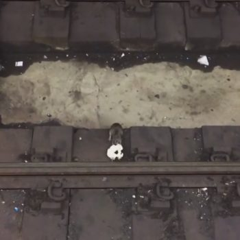 These two rats fighting over a bagel in the subway are all of us when we see free food