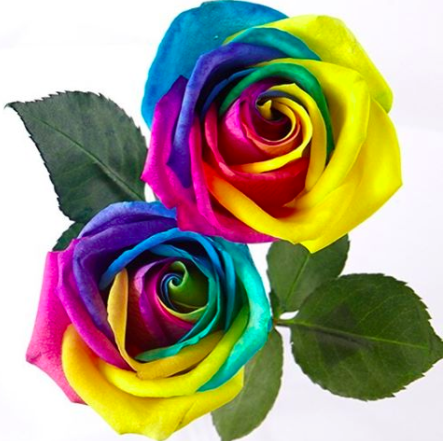 A bouquet of unicorn roses is the mother's day gift we've been waiting for