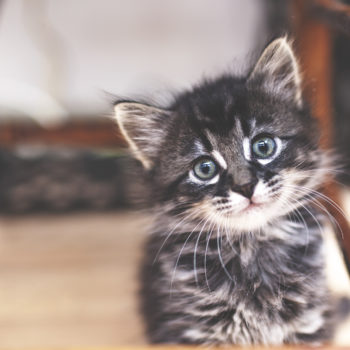 "15 words for ""kitten"" in different languages that will make your heart explode"