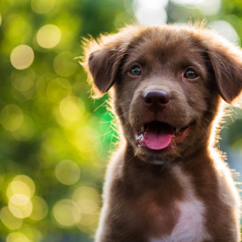 """These 10 adorable words mean """"puppy"""" in different languages"""