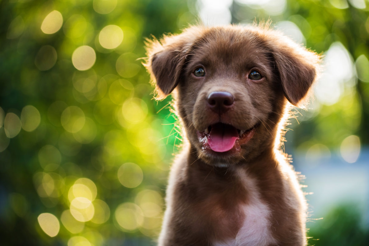 "These 10 adorable words mean ""puppy"" in different languages"