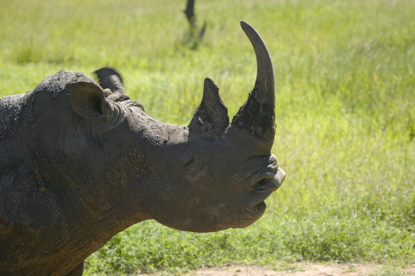 This rhino joined Tinder for a very worthy cause