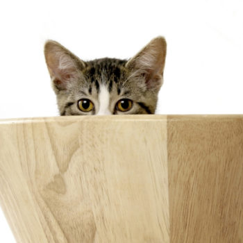 This stealthy kitten just won a game of hide and seek her owners did not know they were playing