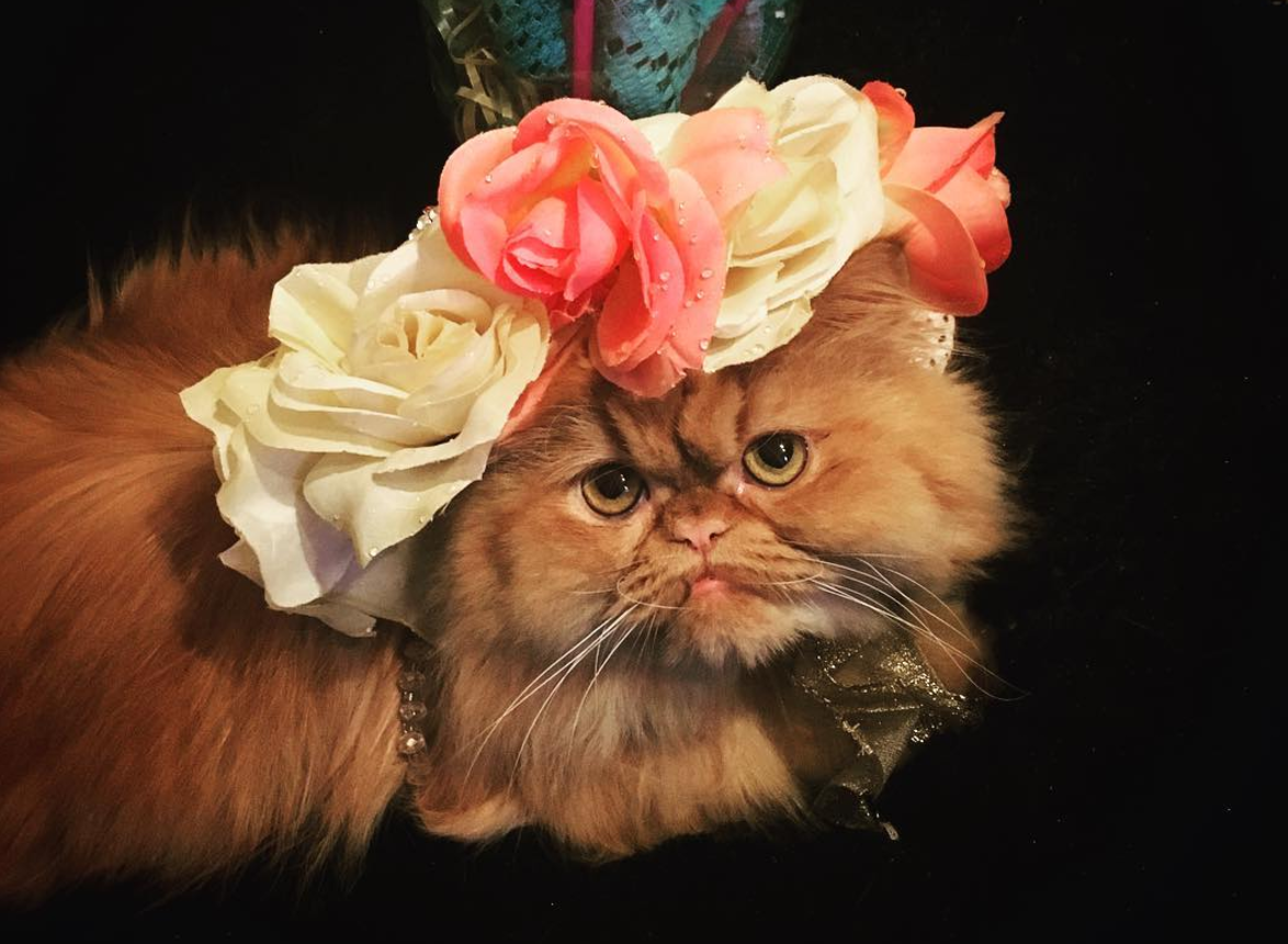8 cats and dogs that totally got in on the Kentucky Derby hat game