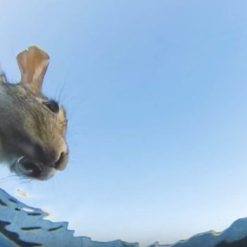 This underwater view of animals drinking from a bucket is oddly fascinating