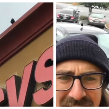This guy's attempt to show how birds defend their territory went horribly wrong — on purpose