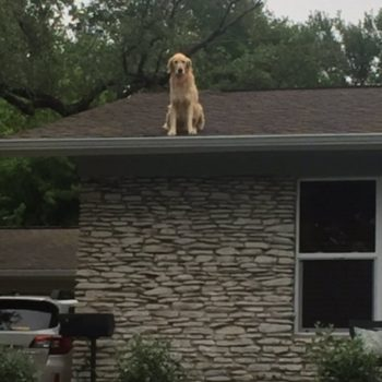 This dog has the most unusual chill spot ever, and the internet cannot handle it