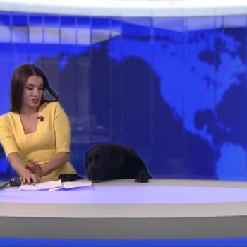 This friendly dog interrupted a news broadcast and totally stole the spotlight