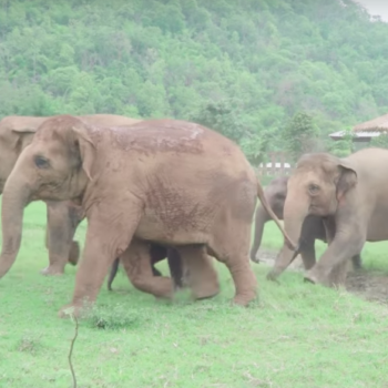 These elephants *ran* to greet a rescued baby elephant, and we're trying not to cry