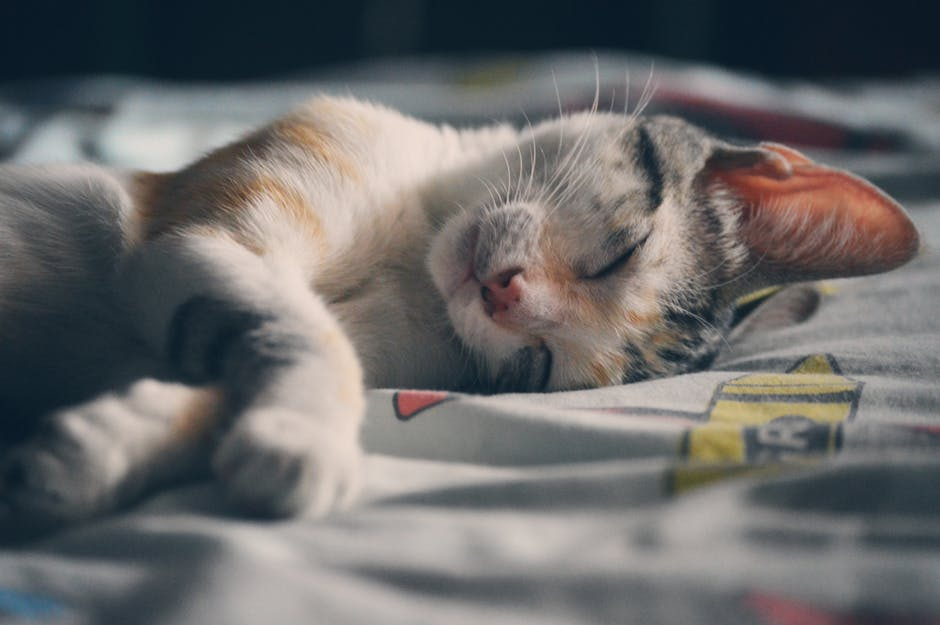 10 things you should do before adopting a cat so you can be the best pet parent ever