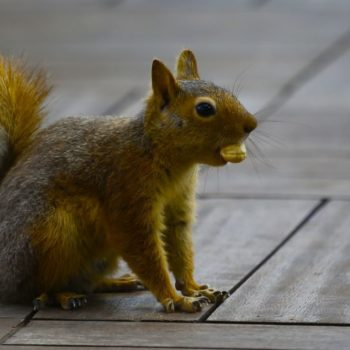 A squirrel broke into this woman's home, and she totally could not deal