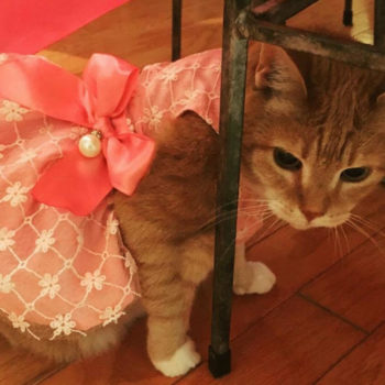 This cat had the coolest quinceañera, and she clearly loved it