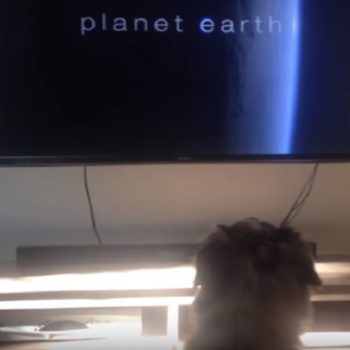 "This dog loves watching ""Planet Earth,"" and to be honest, we totally get it"