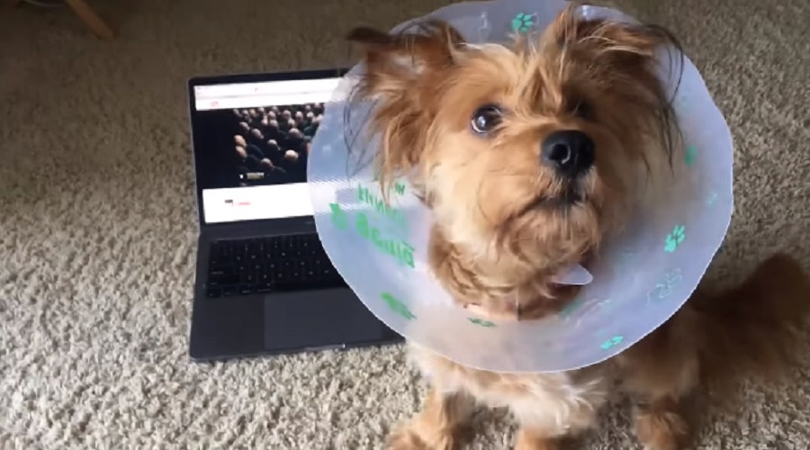"This dog sits on cue to Kendrick Lamar's ""Humble,"" because apparently all living creatures are obsessed with him"