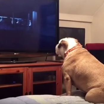This bulldog watched a horror movie and reacted like a total badass