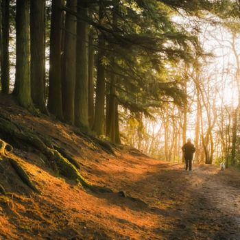 Forest bathing just might be the summer's version of hygge