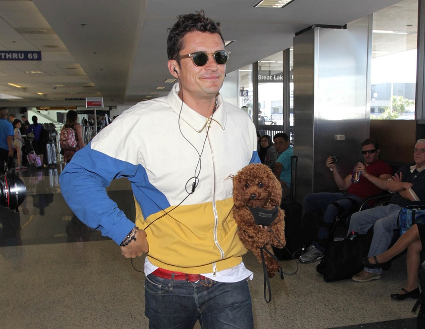 In appreciation of Orlando Bloom's tiny teddy bear dog