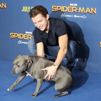 "Tom Holland had *the best* date on the ""Spider-Man"" blue carpet: his dog"