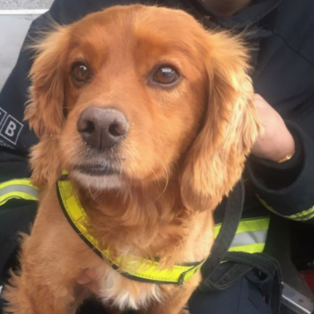 The internet wants to hug these heroic dogs who helped firefighters after the Grenfell Tower fire