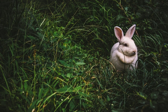 Here's how looking at a picture of a cute bunny could save your relationship