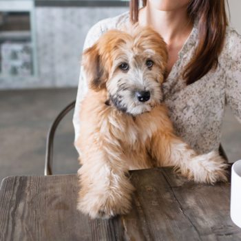 Buying your morning coffee from this coffee shop will support rescue dogs