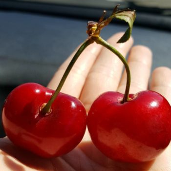 Strawberry cherries are the creamy pink fruit Elle Woods would eat by the pool