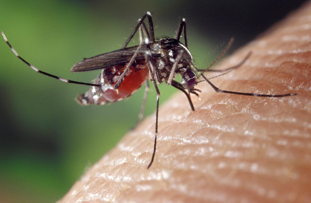 If you get giant, itchy mosquito bites, you're not alone — and here's why it happens