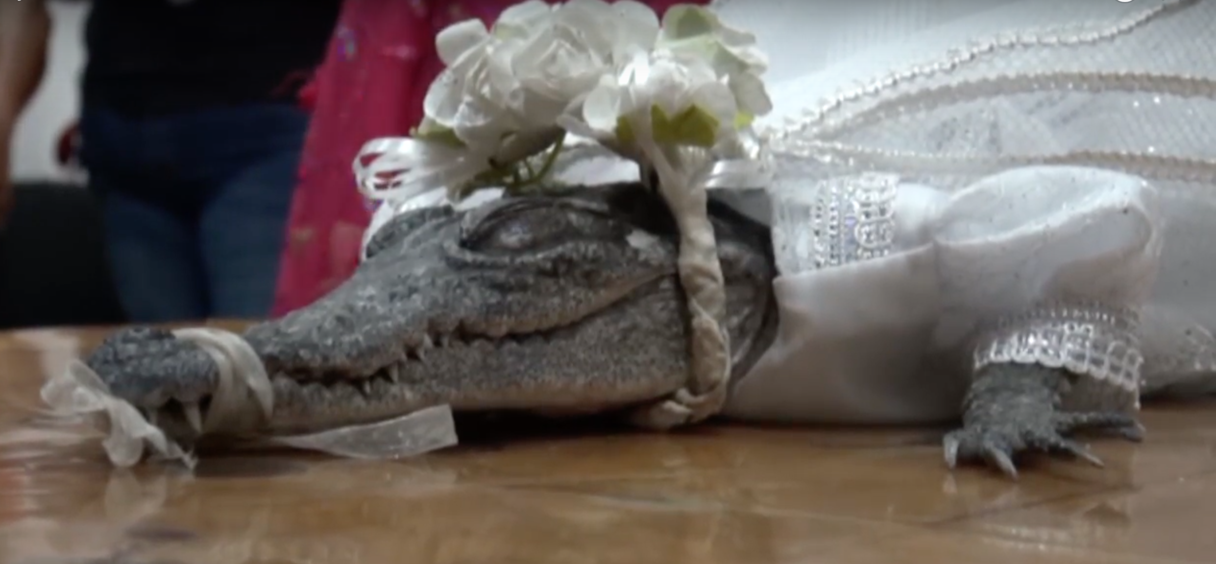 A Mexican mayor married a crocodile because of a 228-year-old tradition