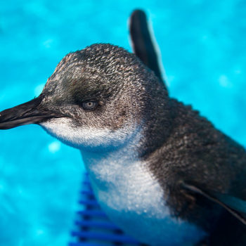 This naughty penguin got called out for its bad behavior