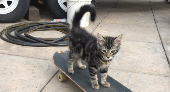 This skateboarding cat is currently dominating Twitter