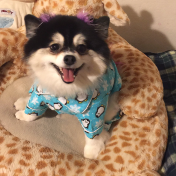 Every dog parent will understand this woman's instructions for her pet sitter