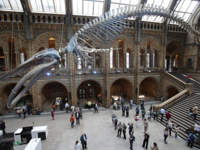 'Hope' chases out 'Dippy' as star of London museum