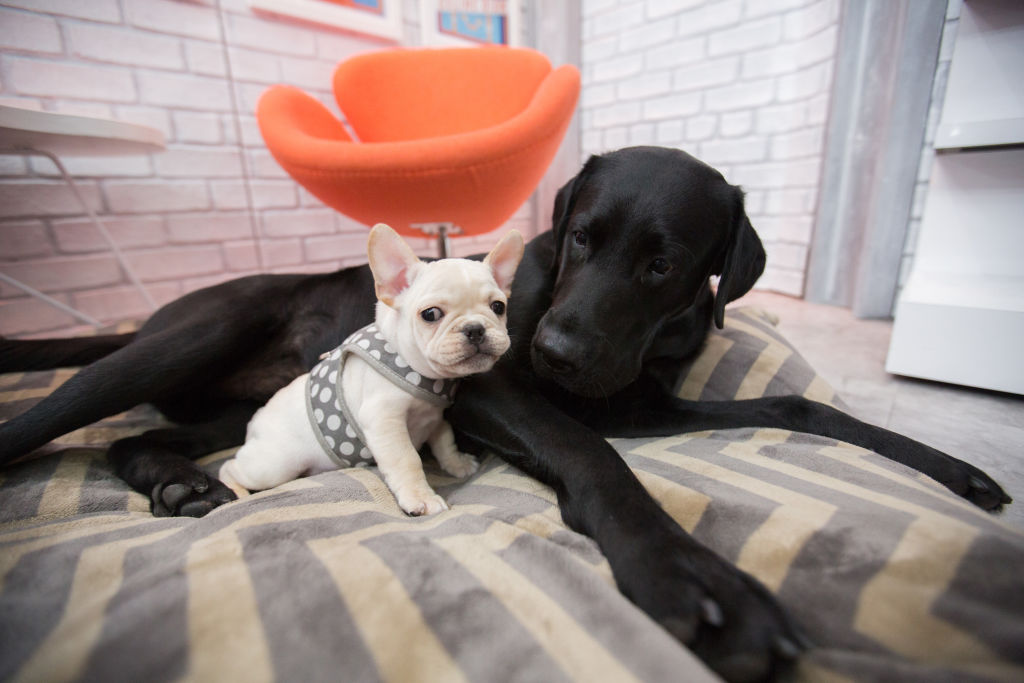 Turns out that looking at photos of puppies is good for your relationship, so sign us up