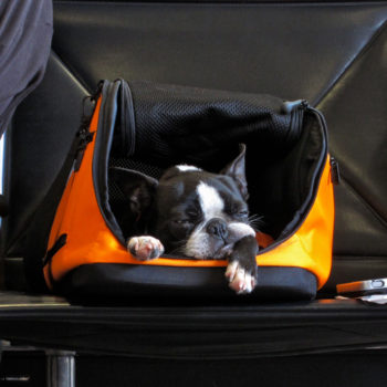Here's what you should know before flying with your pet