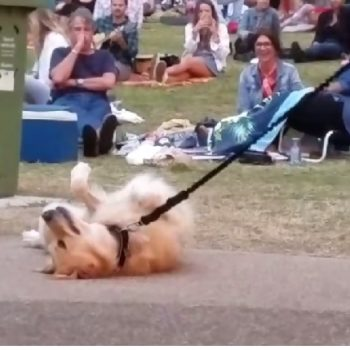 This dog refusing to leave the park is all of us