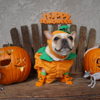 10 adorable dog Halloween costume ideas for your pup