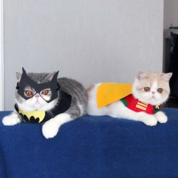13 ridiculously cute Halloween costumes for your cat
